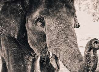 The Blind Men and the Elephant - American Literature